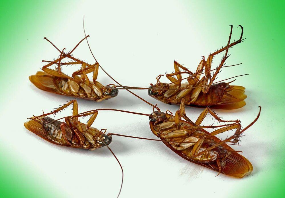 Καταπολέμηση & απεντόμωση κατσαρίδων