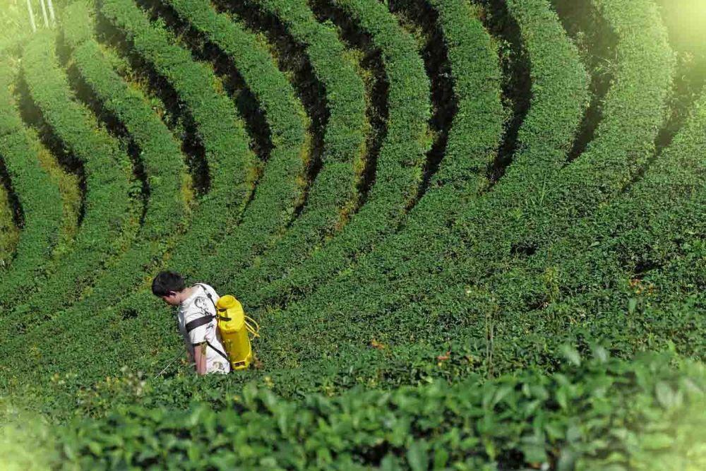 Οικολογικές μέθοδοι για απολύμανση του εδάφους