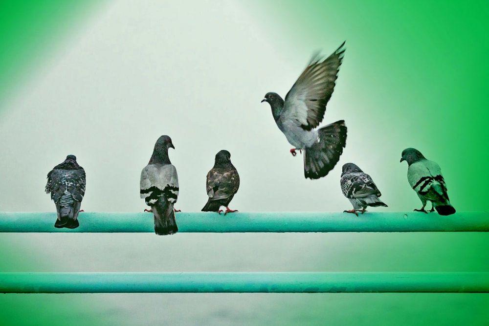 Αποτελεσματική απώθηση πτηνών
