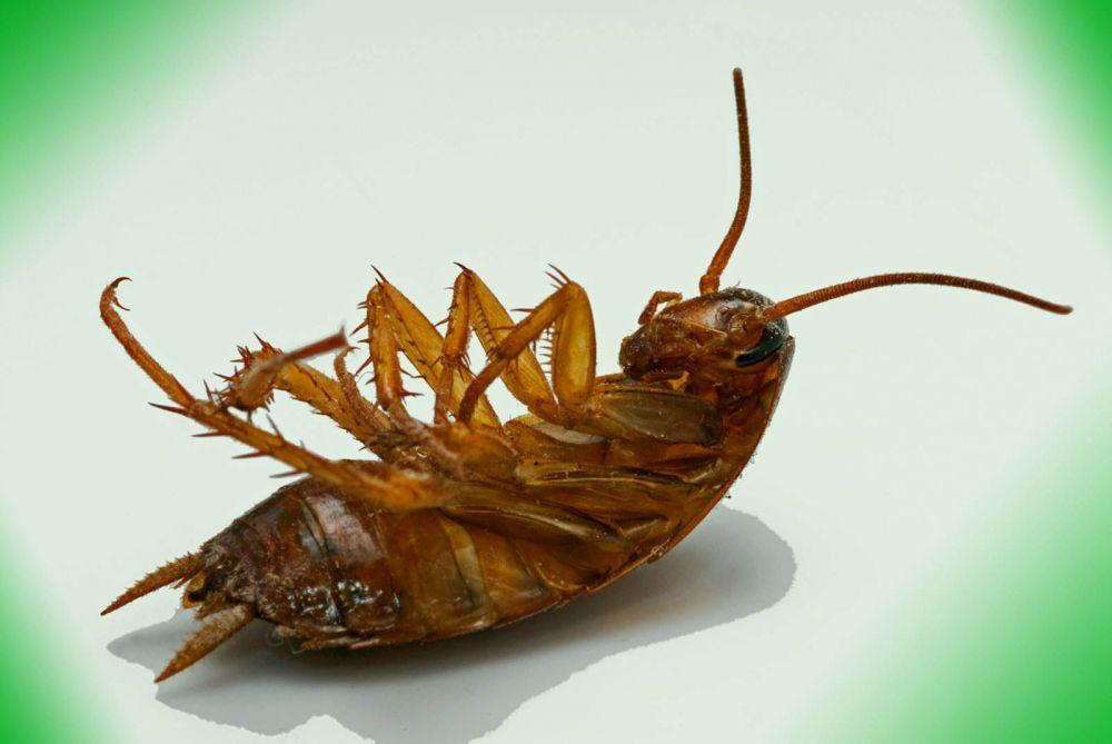 Τρόποι εξόντωσης κατσαρίδων