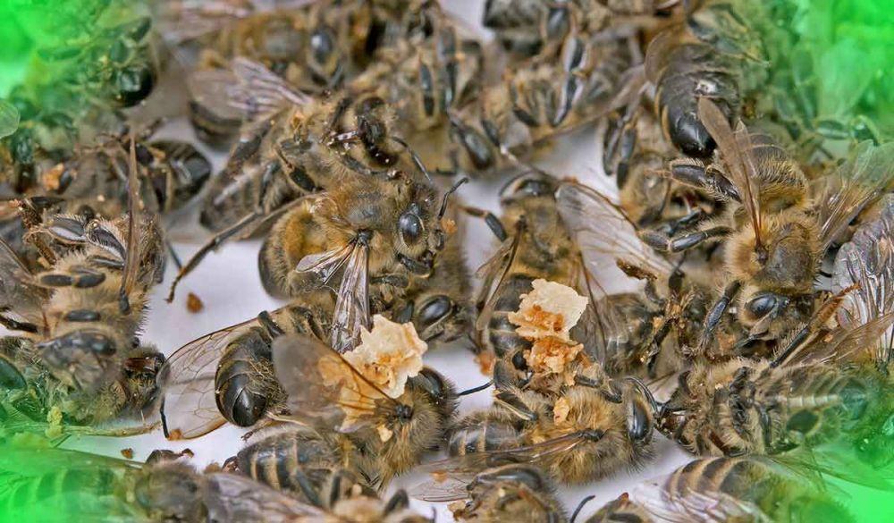 Καταπολέμηση σε μυρμήγκια, κουνούπια και άλλα έντομα