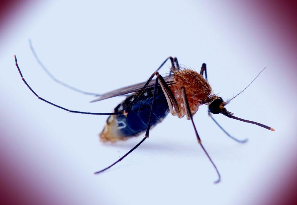 Καταπολέμηση και εξολόθρευση κουνουπιού