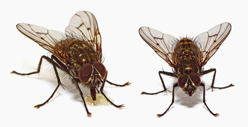 Καταπολέμηση και απεντόμωση μύγας
