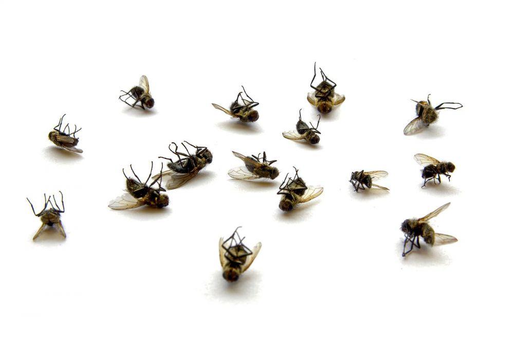 Αντιμετώπιση σε μύγες και εξόντωση