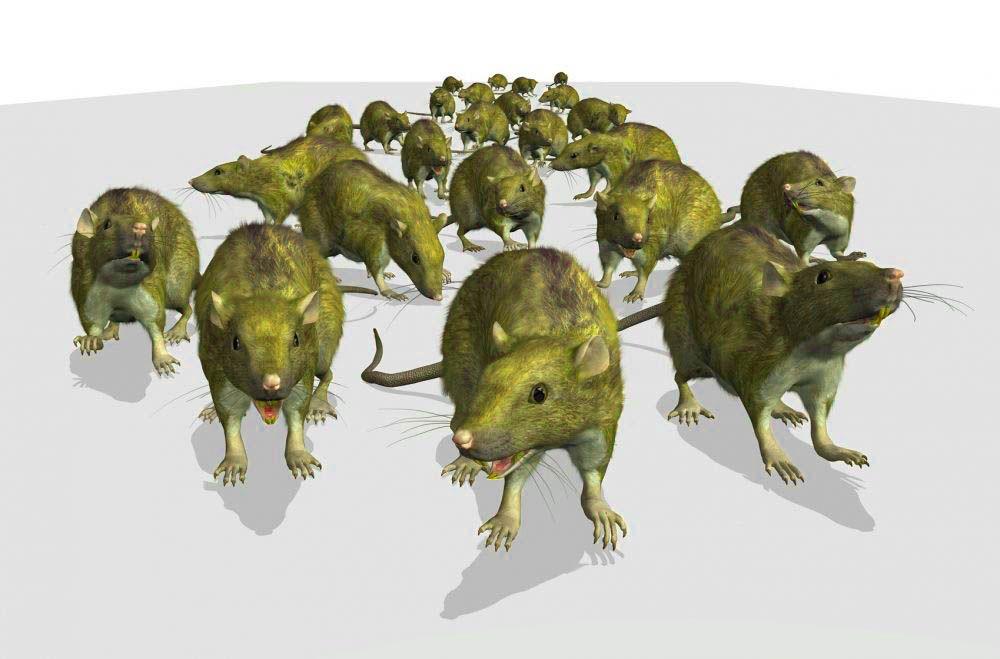 Μυοκτονίες - Καταπολέμηση σε αρουραίους και ποντίκια